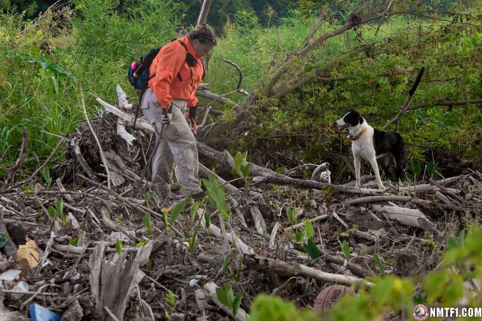 San Marcos, TX--August 22, 2015-- Volunteer TEXSAR Search & Rescue team member Tiffanie Turner and her search Collie, Rowan search for still missing residents of Wimberley along the Blanco River. Andrea Booher/FEMA