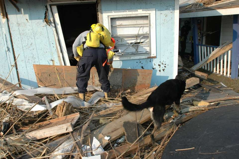 Biloxi, Miss., September 3, 2005 -- A member of the Indiana Task Force 1 Urban Search and Rescue (US&R) team and his canine partner enter a damaged house to search for victims of Hurricane Katrina. FEMA/Mark Wolfe