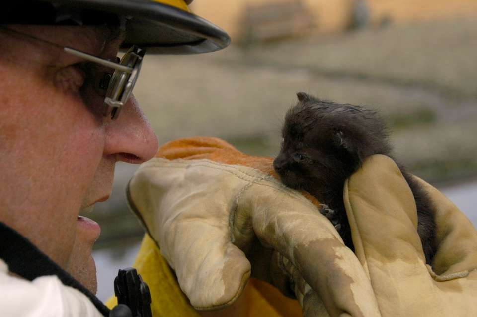 "University, New Orleans, LA, 9-16-05 -- Roy Krueger from the ""Missouri Boon County Urban Search & Rescue Task Force 1"" rescued this kitten from an empty house. It's now on the way to animal rescue. MARVIN NAUMAN/FEMA photo"